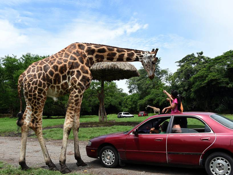 Meninas alimentam uma girafa no parque zoológico aberto Autosafari Chapin, em Guanagazapa, 87 km ao sul da Cidade da Guatemala, nesta sexta-feira (21)
