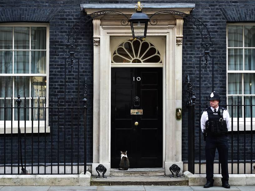 O gato Larry é fotografado em frente à porta do número 10 da rua Downing, em Londres, onde vive o primeiro-ministro britânico, David Cameron