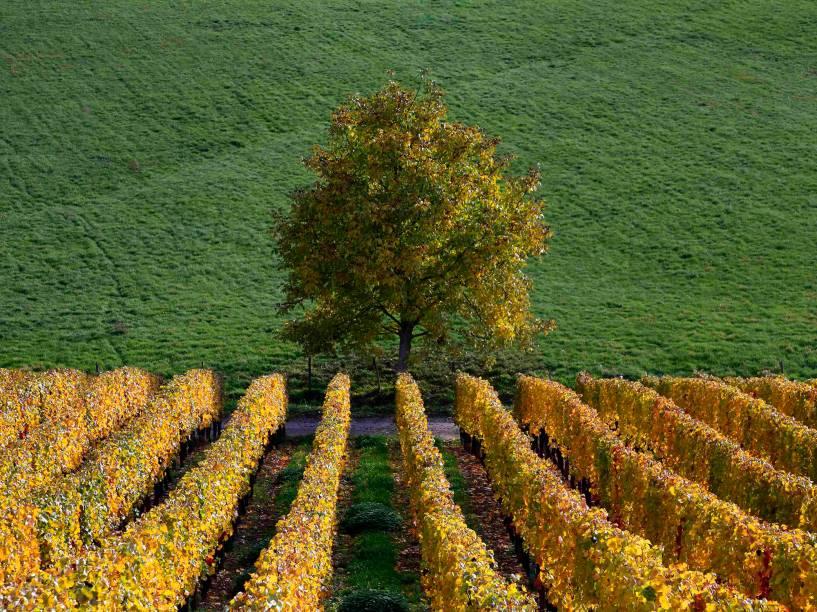 Cores do outono tomaram conta de vinhedos e marcaram uma mudança na estação em Soultz, leste da França