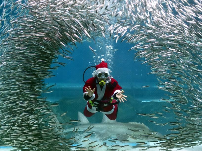 Vestido de Papai Noel, mergulhador sul-coreano nadou com peixes durante evento no Aquário Coex, em Seul