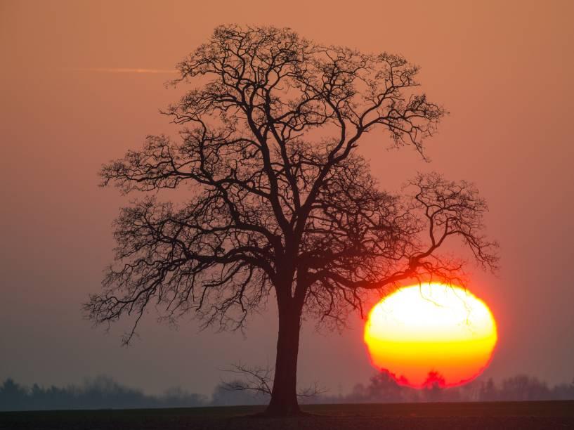 O sol nasce em perto da cidade de Mallnow, na Alemanha - 30/12/2015