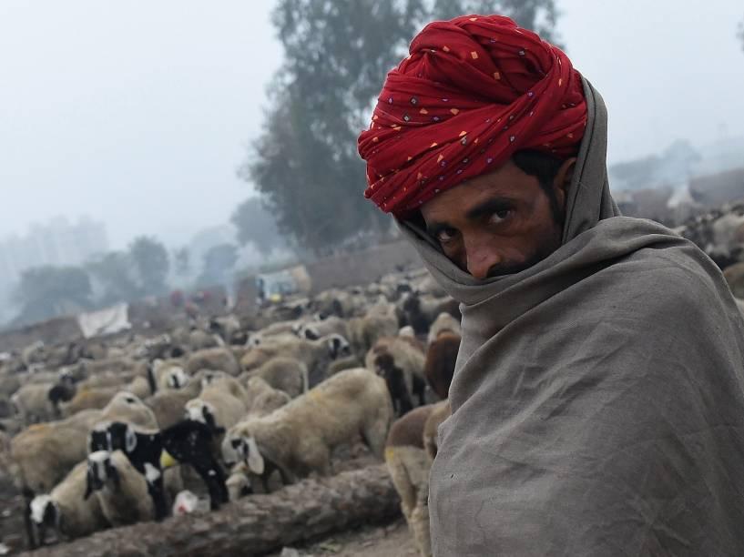 Pastor nômade do Rajastão conduz suas ovelhas em um acampamento nos arredores de Nova Délhi, na Índia - 20/01/2016