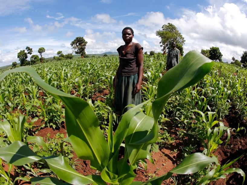 Agricultores de subsistência caminham em seus campos perto de Lilongwe, no Malawi. As chuvas tardias na região ameaçam a cultura do milho e tem empurrado os preços para níveis recordes - 01/02/2016