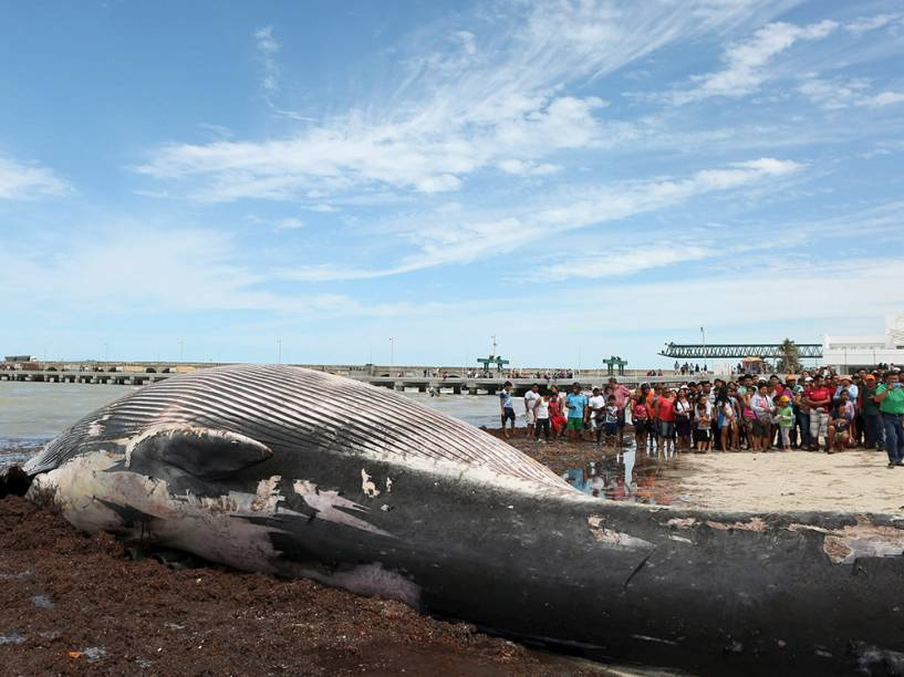 Dezenas de moradores observam baleia encontrada morta neste domingo (28) em praia de Progreso, localizada no Estado de Yucatan, no México. O animal tem cerca de 12 metros de comprimento e 10 toneladas. De acordo com a mídia local, é a primeira baleia encontrada morta na costa da cidade - nas últimas semanas, no entanto, foram encontrados algumas carcaças de golfinhos em algumas praias