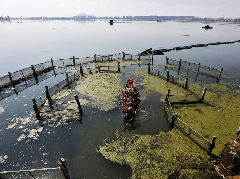 Uma Mulher é fotografada em barco repleto de ervas no lago Dal em Srinagar, na Índia