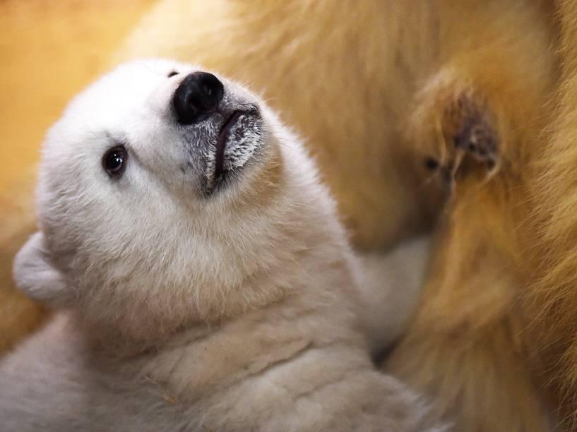Um filhote de urso polar é fotografado com sua mãe no zoológico de Bremerhaven, na Alemanha. A fêmea nasceu em dezembro do ano passado