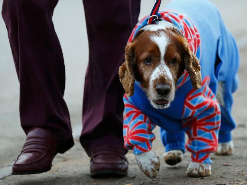 """Competição entre cães """"Crufts Dog Show"""", que avalia critérios em cachorros de raça, em Birmingham, Londres"""
