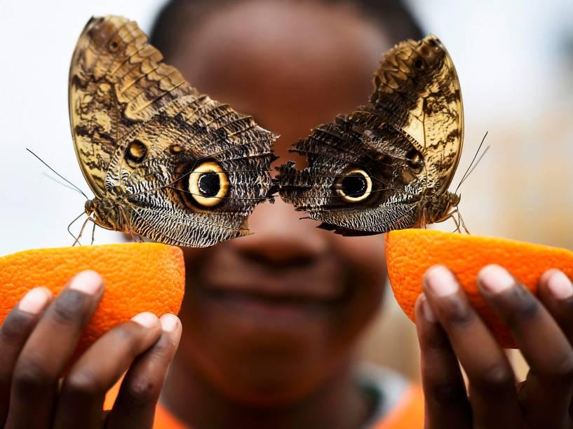 """Garoto posa com duas borboletas no festival Sensational Butterflies, """"Borboletas Sensacionais"""", que ocorre na Inglaterra, para celebrar a chegada da primavera"""