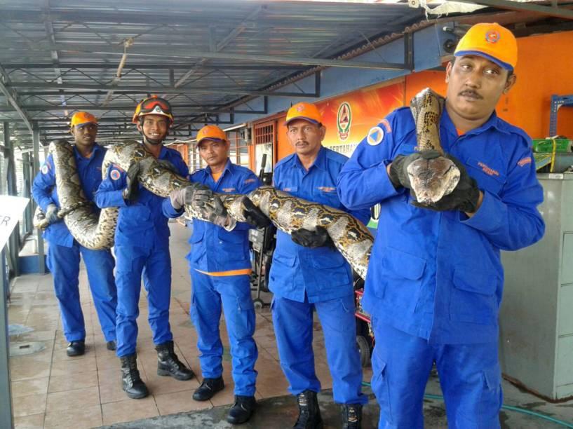 Membros da Força de Defesa Civil da Malásia posam com uma cobra python medindo quase 7,5 metros e pesando 250 kg capturada perto de um canteiro de obras na cidade de Paya Terubong - 11/04/2016