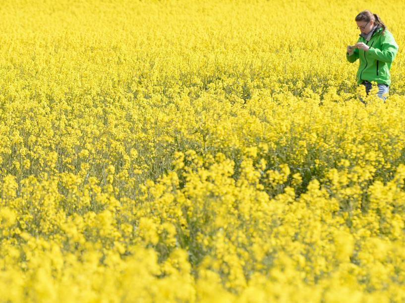 Estudante tira fotos das plantas em um campo perto da aldeia de Olching, região da Baviera , sul da Alemanha - 04/05/2016