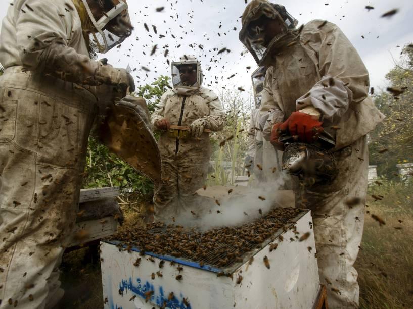 Apicultores palestinos usam fumaça para acalmar abelhas, durante processo de coleta de mel, em uma fazenda de Rafah, no sul da Faixa de Gaza- 12/04/2016