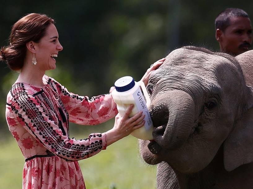 Kate Middleton alimenta um bebê elefante no Centro de reabilitação de animais selvagens e Conservação (CWRC) na reserva florestal Panbari em Kaziranga, na Índia. O casal da realeza britânica realiza turnê pela Ásia - 13/04/2016
