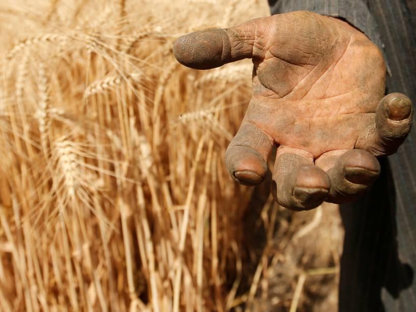 Fazendeiro egípcio mostra a palma da mão depois de uma jornada de trabalho colhendo trigo, na fazenda de Qalyub, em El-Kalubia, nordeste de Cairo - 04/05/2016