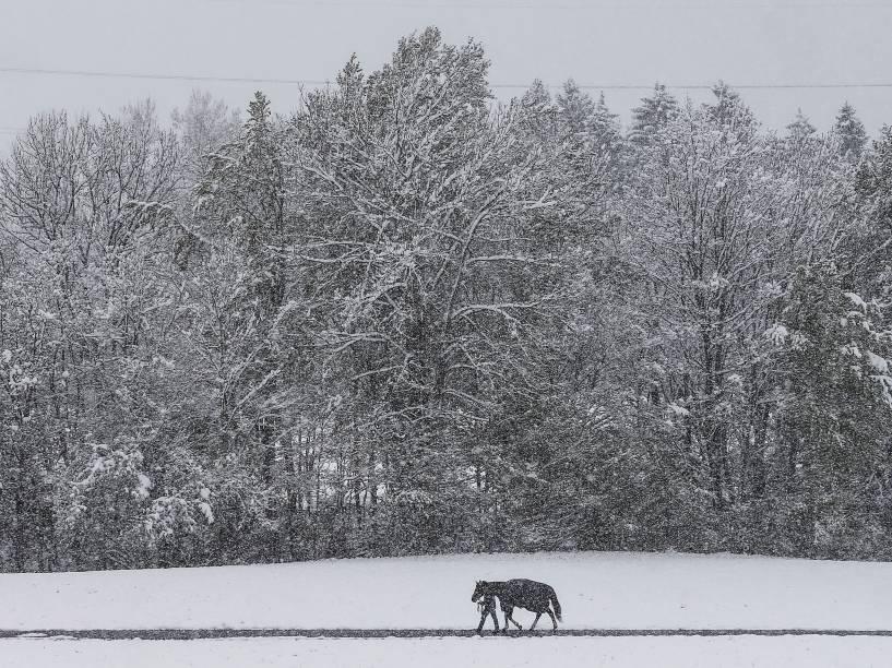 Homem caminha com seu cavalo em um campo coberto de neve em Gnadenwald, na Áustria - 25/04/2016