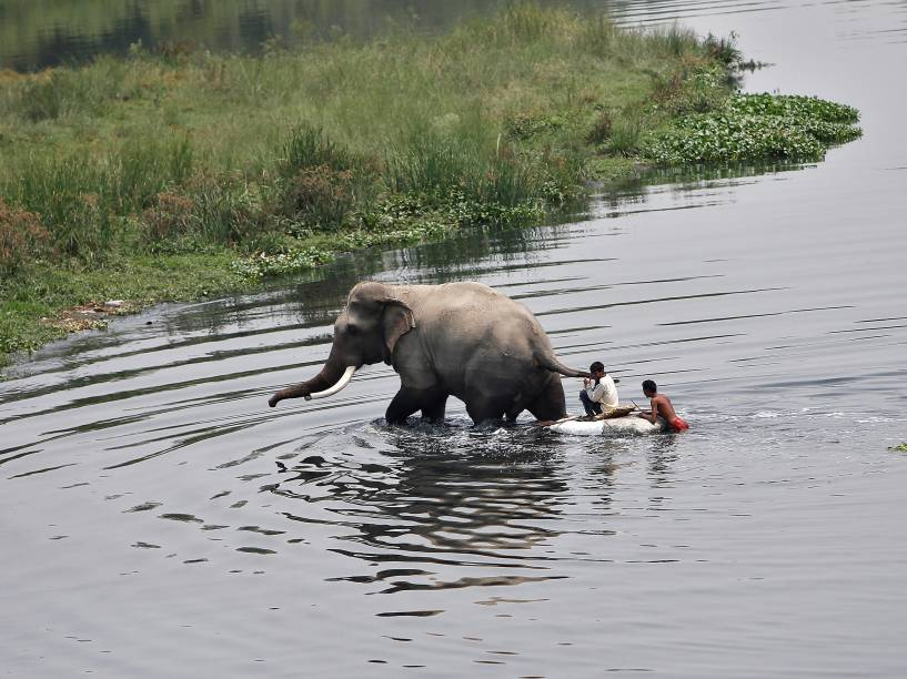 Jovens pastores atravessam o rio Yamuna junto com um elefante em Nova Délhi, na Índia - 09/05/2016