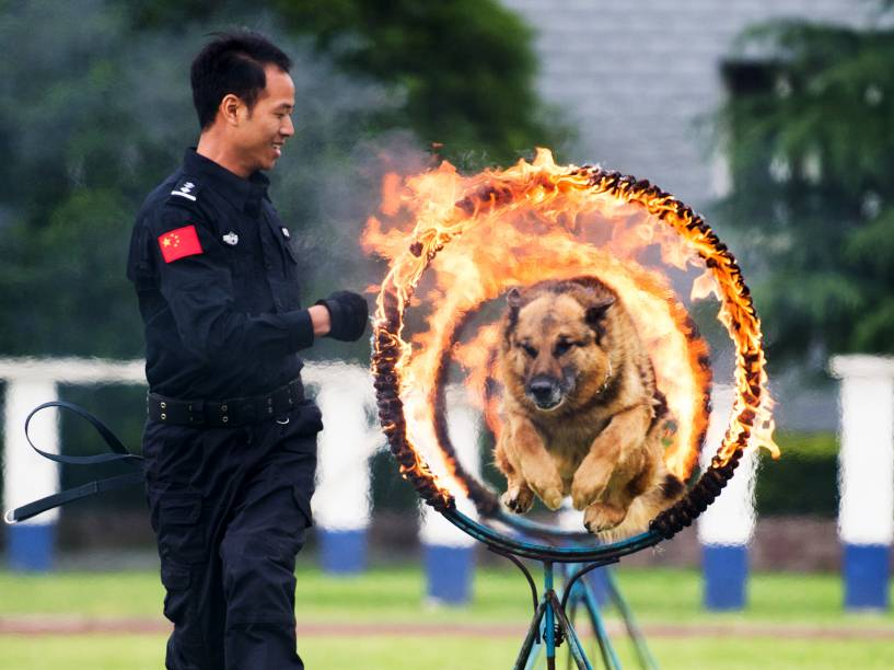Cão da polícia salta através de um anel de fogo durante exibição para o público em Guiyang, província chinesa de Guizhou