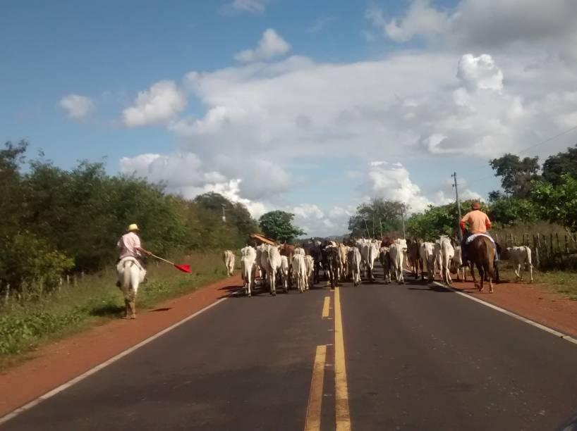 Rota Castelo do Piauí - Teresina: animais e buracos na estrada PI-115 retardaram atendimento das jovens estupradas
