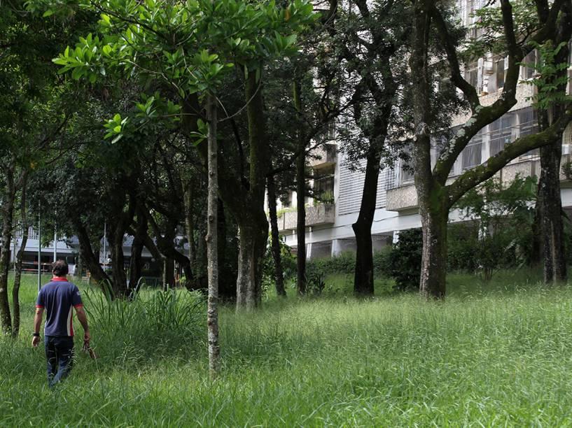 No Plano Piloto, a região central de Brasília, o mato alto denuncia a incapacidade de gestão