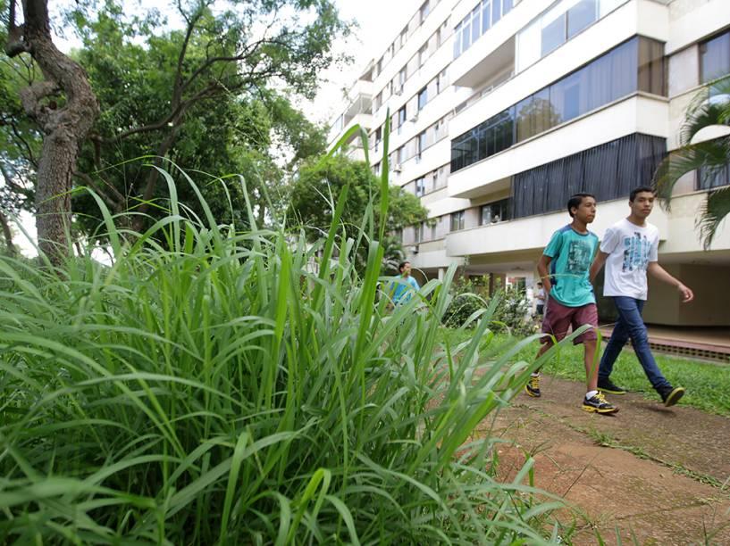 Pedestres caminham ao lado de mato alto em região nobre de Brasília