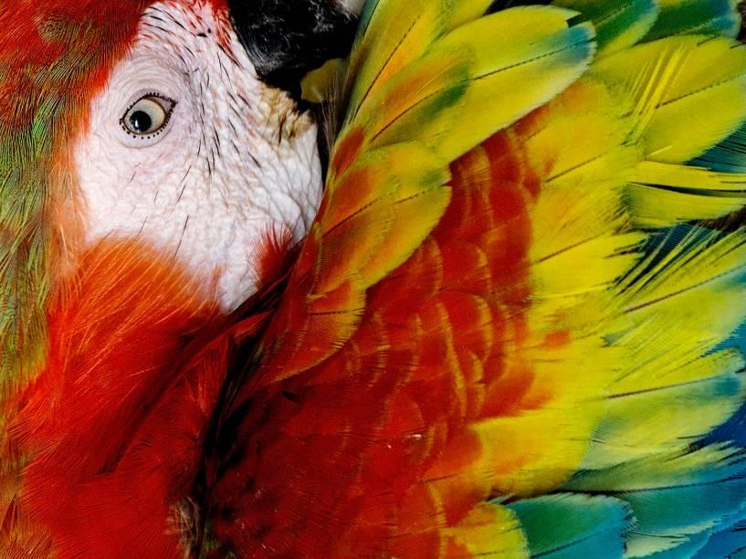 Arara vermelha é fotografa no maior parque de aves do mundo, em Kuala Lumpur