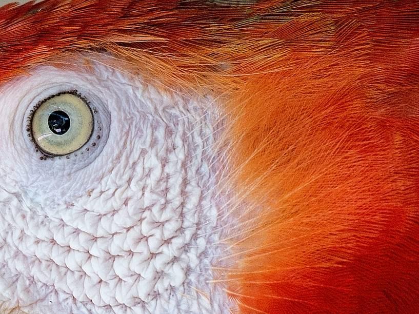 O maior parque aviário de Kuala Lumpur abriga mais de 3000 pássaros de 200 espécies diferentes, incluindo esta arara