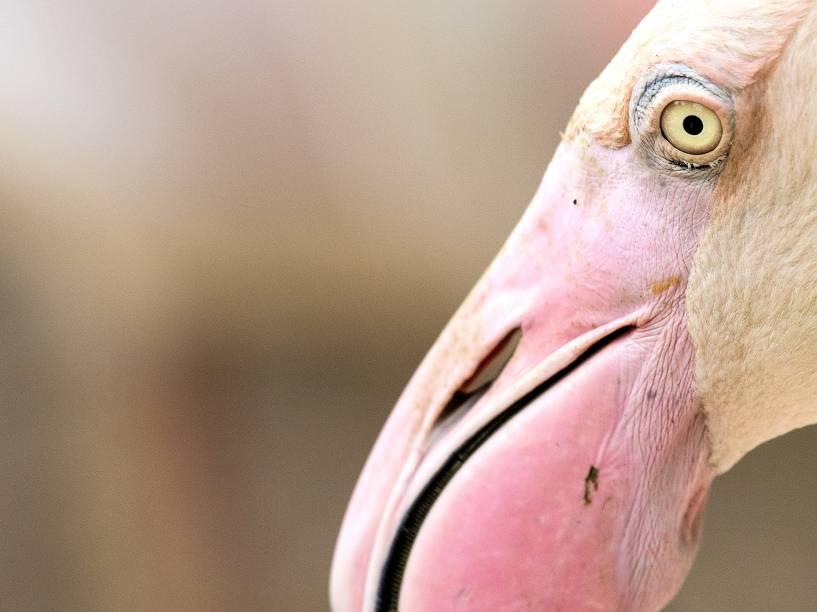 Flamigo é fotografado no parque aviário de Kuala Lumpur