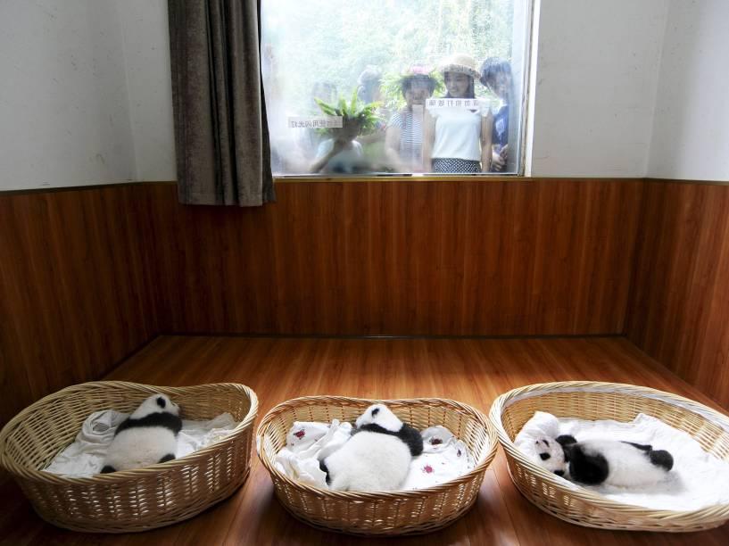 Filhotes de panda gigante foram apresentados ao público pela primeira vez nesta sexta-feira (21)