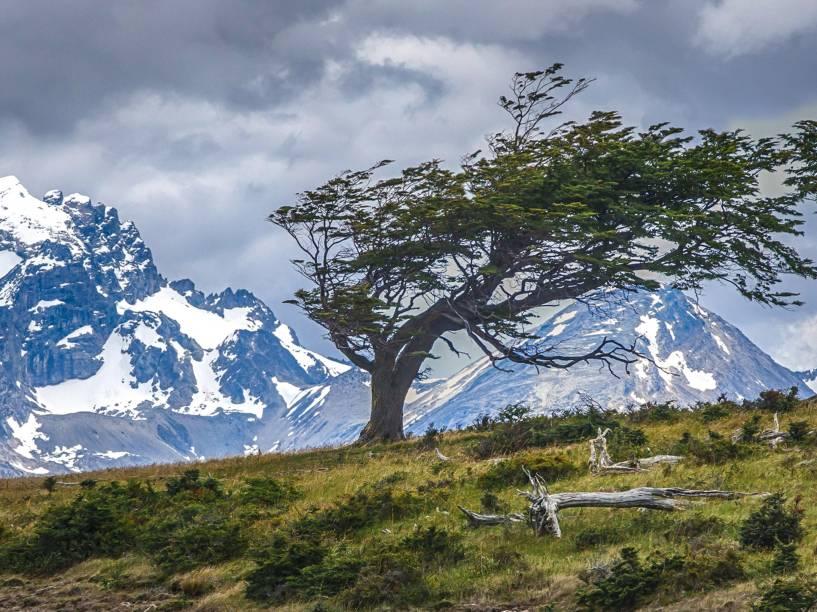 Árvore entortada pelo vento na Estância Harberton, a primeira a se estabelecer na Terra do Fogo, fundada em 1886