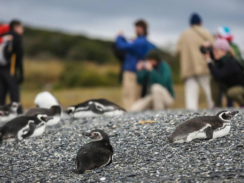 Turistas passeiam pela Isla Martillo, mais conhecida como Pinguinera, onde pinguins se reunem em seu período de reprodução