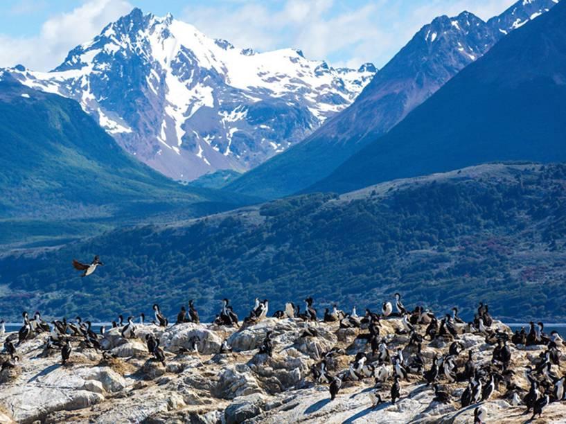 Colônia de cormorões na Ilha dos Pássaros, no Canal de Beagle, na região de Ushuaia