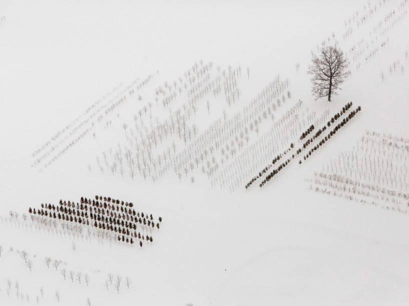 Em novembro, árvores foram cobertas por forte nevasca em Buffalo, nos Estados Unidos