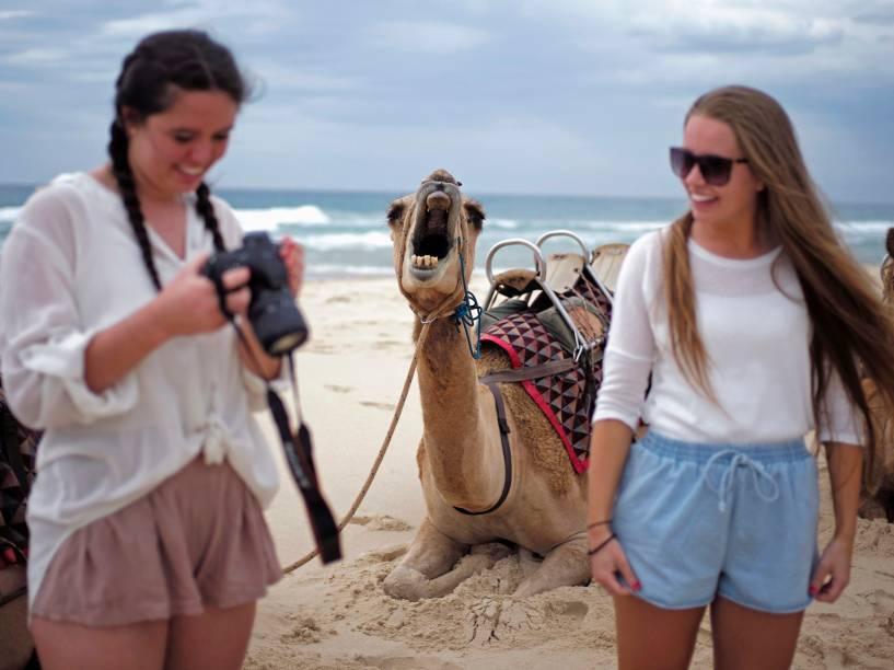Em praia ao norte de Sidney, turistas conferem fotos dos camelos que já foram utilizados como meio de locomoção nos desertos australianos. Hoje divertem os visitantes