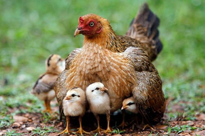 animais-junho-20120617-18-original.jpeg