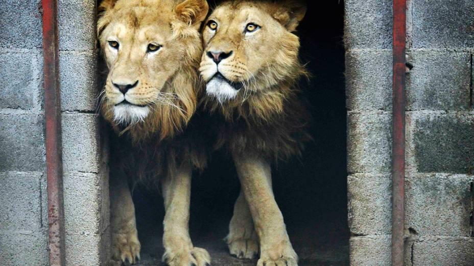 Os animais eram mantidos em condições precárias, dentro de uma jaula pequena, enferrujada e em meio a muita sujeira