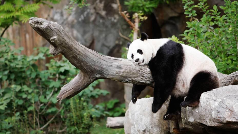 O filhote de Mei Xiang, nascido há menos de um mês foi encontrado morto dentro do recinto no zoológico de Washington cerca de uma hora depois da mãe emitir sons de sofrimento