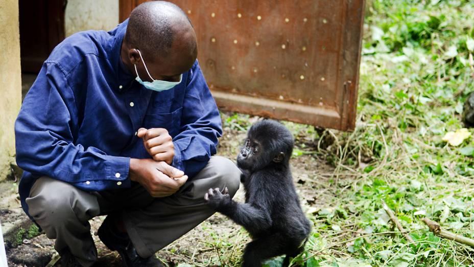 Segundo o diretor do parque Emmanuel de Merode, o conflito armado que assolou o país por mais de uma década e a extração de recursos naturais tornaram muito difícil a tarefa de proteger esses animais vulneráveis