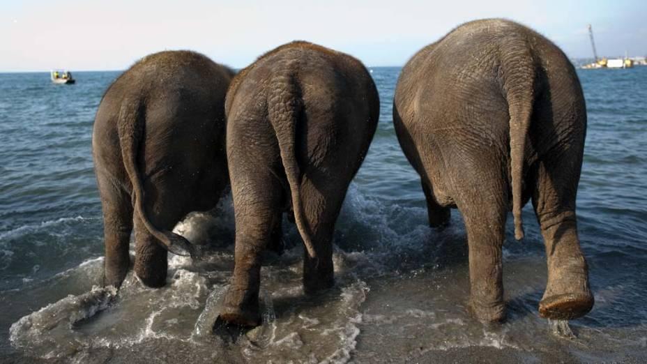 Elefantes do circo Knie no Lago Genebra em Lausanne, Suíça