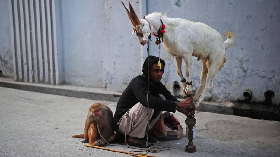 Apresentação de animais nas ruas de Rawalpindi, no Paquistão