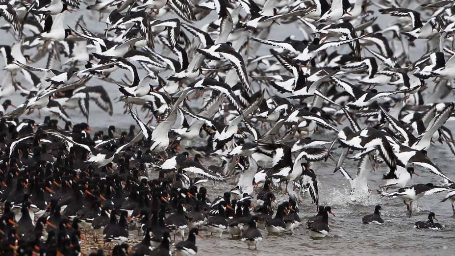 Aves na Reserva Natural de Snettisham, no Reino Unido