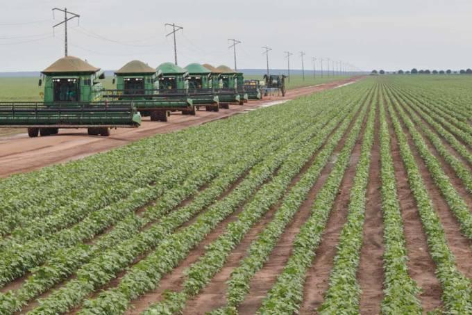 balsas-maranhao-algodao-agricultura-20110211-original.jpeg