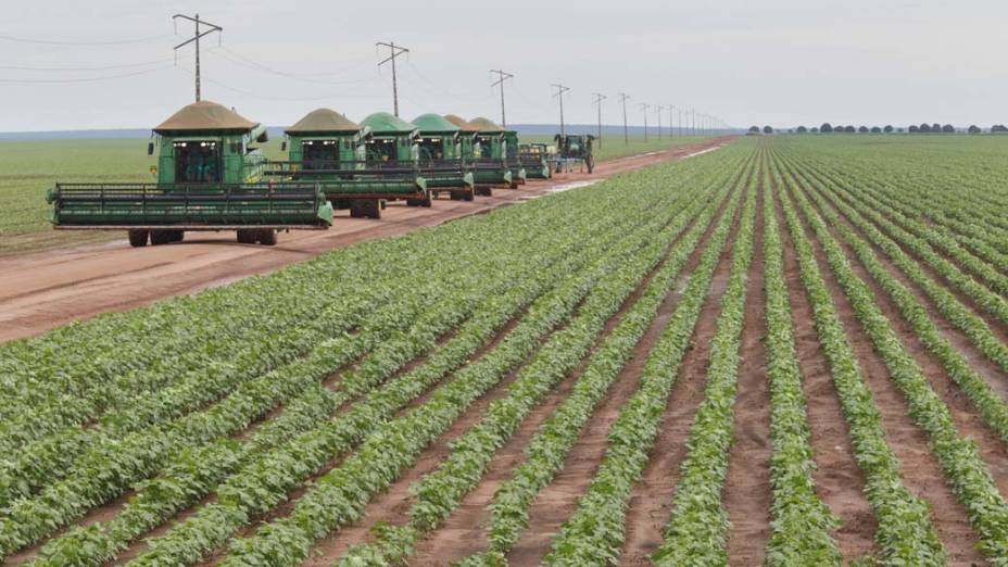 Plantação de Algodão em Balsas no Maranhão
