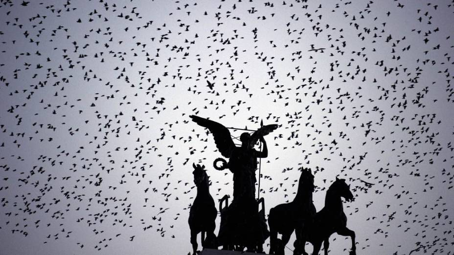 Revoada de passarinhos no Piazza Venezia ao cair da noite em Roma, Itália