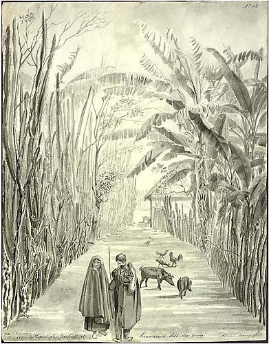Adrien-Aimée Taunay pintou Cerca de cactos e Bananeiras denominadas da terra de Guimarães (1827) com pinceis de nanquim.