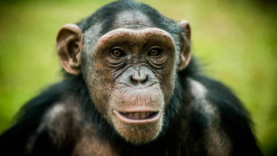 Zoo de São Paulo promove atividades para estimular o intelecto dos animais