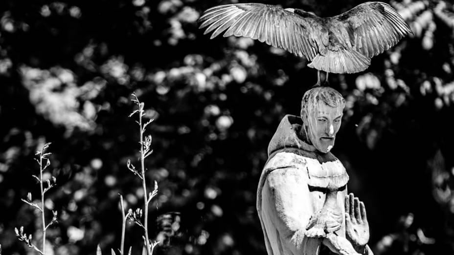 Urubu abre as asas sobre imagem de São Francisco de Assis no lago da instituição