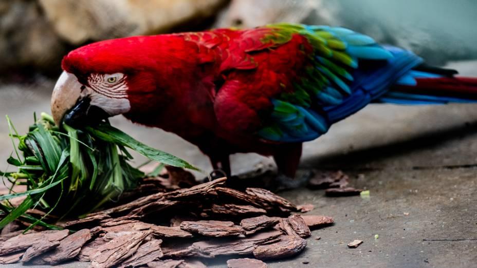Araras recebem pedaços de tronco como parte do Programa de Enriquecimento Comportamental Animal