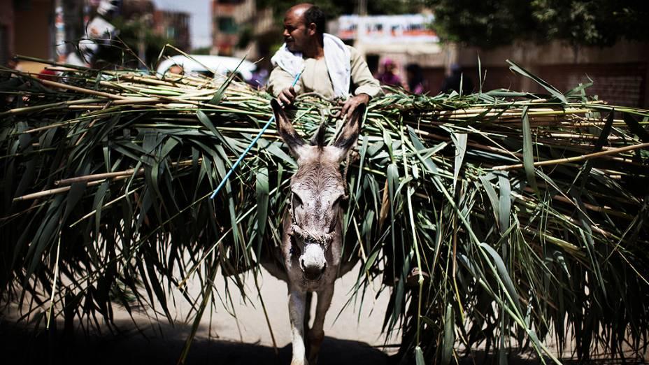 Agricultor egípcio com seu burro, passado em um posto de votação na aldeia de Namul, 60 kms a norte do Cairo. Colégios eleitorais abriram nesta quinta-feira para o segundo dia de votação das eleições presidenciais, no Egito