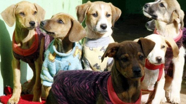O canil municipal de Apucarana abriga 170 cachorros e sessenta gatos