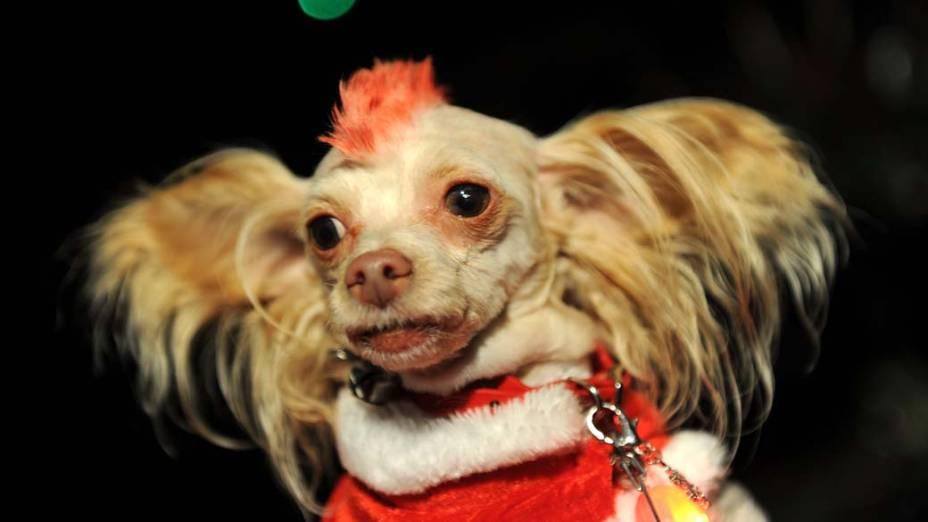 """Cachorro participa do evento """"Toys for Dogs"""", em Nova York"""