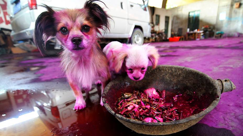 Cachorrinhos tingidos de rosa são vistos em Jinan, na província chinesa de Shandong. Um saco da substância, que é facilmente solúvel em água, caiu em uma rodovia e se espalhou em uma vila próxima depois de ser esmagado por veículos que passavam